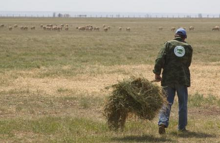 Ranger managing saiga fields
