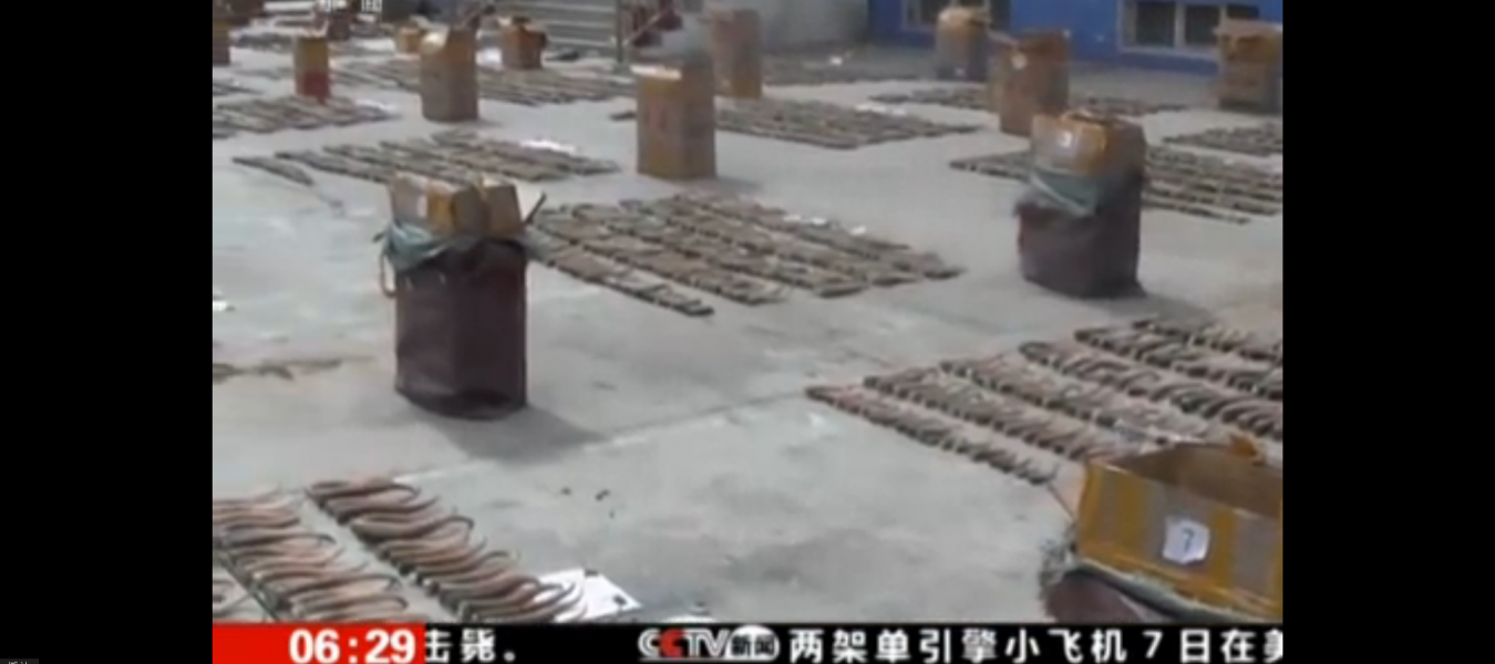 A large consignment of saiga horns is confiscated in China